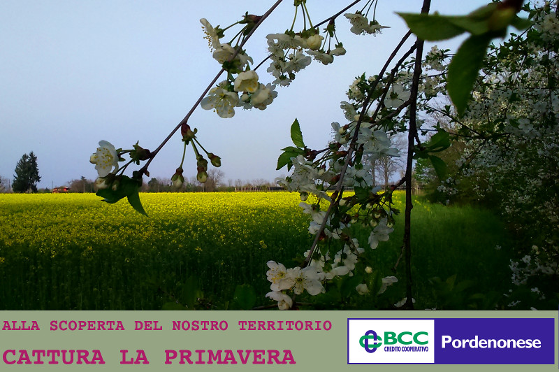 contest primavera mobile